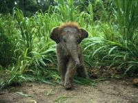 The Cutest Baby Elephant you ever saw!