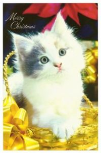 Christmas Cards and images (Xmas 2017) 48 - Christmas Kitten