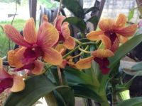 My Orchids!!