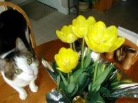 Whiskers and flowers2002