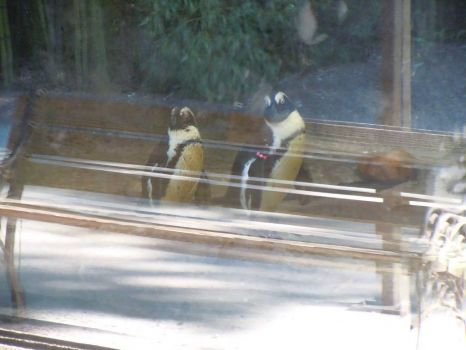 Penguins on a bench?