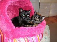 Oscar and Tiggy
