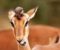 1777-bird-and-fawn
