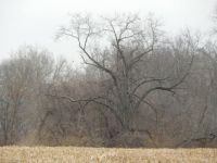 The bare tree.