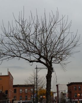Bare Tree on Cloudy Day in the city