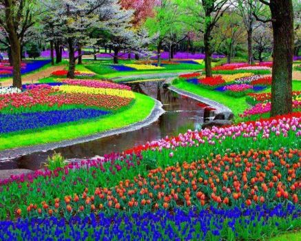 Keukenhof Park in Holland