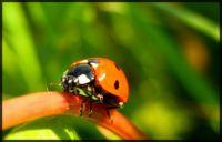 Ladybug climber