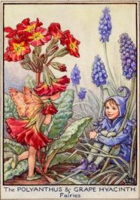 The Polyanthus & Grape Hyacinth Fairies (smaller size)