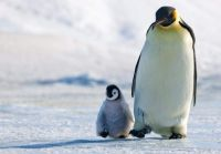 2  ~  Happy Fathersday.  :-))  ~  Taking a stroll with dad.