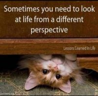 Diferentes Perspectivas