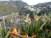 Madeiran Hillside