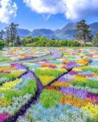 Kuju Flower Park in Oita, Japan