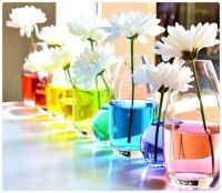 Lovely Line of White Flowers in Coloured Water-filled Vases