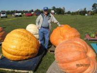 Gigantic Pumpkins