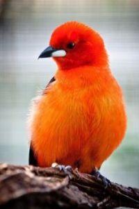Mooi oranje