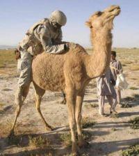 Nadrzený voják a prekvapený velbloud