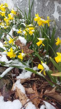 Inevitable March of Spring
