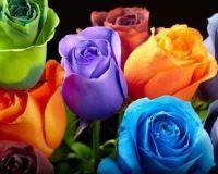 ♥ FRIDAY FLOWERS ♥