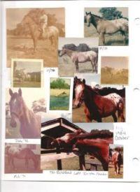 THEME:  Vintage Photos  My beloved Sundance, my first horse.