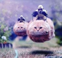 Speeder Cat Attack