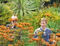 Swami' Garden- Lion's Tail Flowers