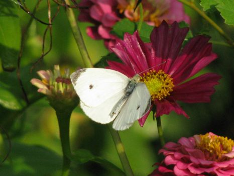 chasing white butterflies