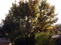 Welcome Fall . . . . .