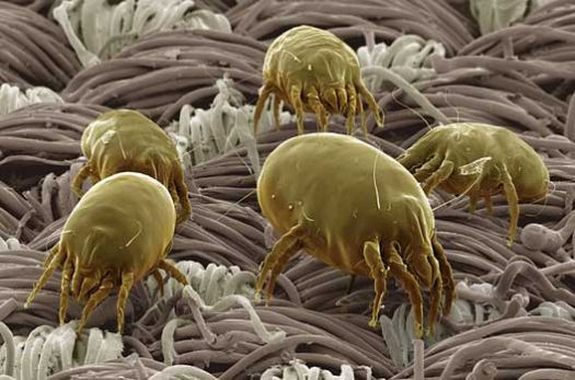 Dust Mites on a Sheet