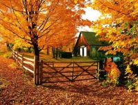 Autumn Barn Scenery