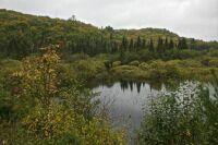 Along Peskeekee Rd - Upper Peninsula, MI