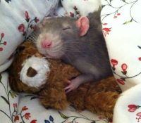 Goodnight, rat. Goodnight, bear.