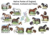 The Dartmoor and other Native Breeds of Pony
