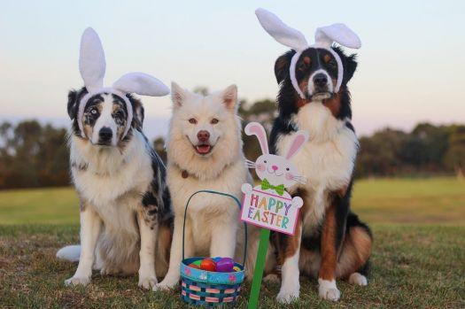 Bunny Dogs
