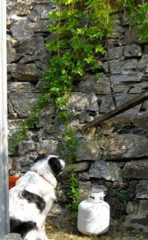 boo dog - there is a squire up there somewhere!