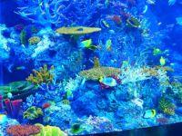 Aquarium, Singapore