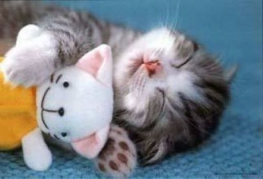 Happy Kitty Dreams
