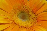 Nice Golden Flower