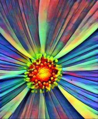 Radial Flower