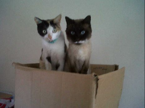 Picasso and Twyla in their favourite box!