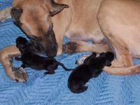 Reba & Helios puppies