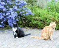 Sophie and Ferdy wondering...