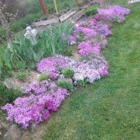Spring in Max's garden