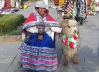 In the Market with Her Alpaca
