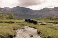 Border Collie leaping over a stream near Torridon in the Scottish Highlands