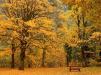 autumn in the park -challenge