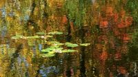 Water Lilies & Reflections_4192