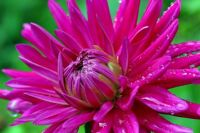 Purple-Flower-1