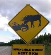 I just love invincibel mooses  :-)