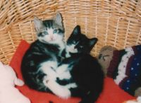 Dylan and Tammy  kittens