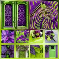 LIME GREEN & PURPLE